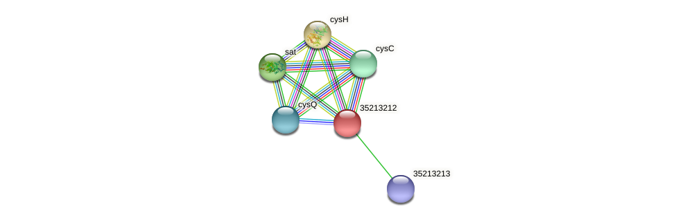 gll2643 protein (Gloeobacter violaceus) - STRING interaction network