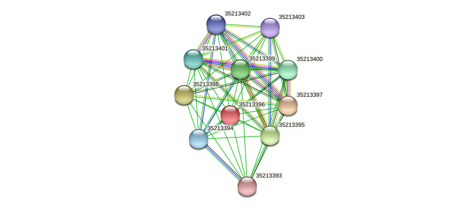 gll2826 protein (Gloeobacter violaceus) - STRING interaction network