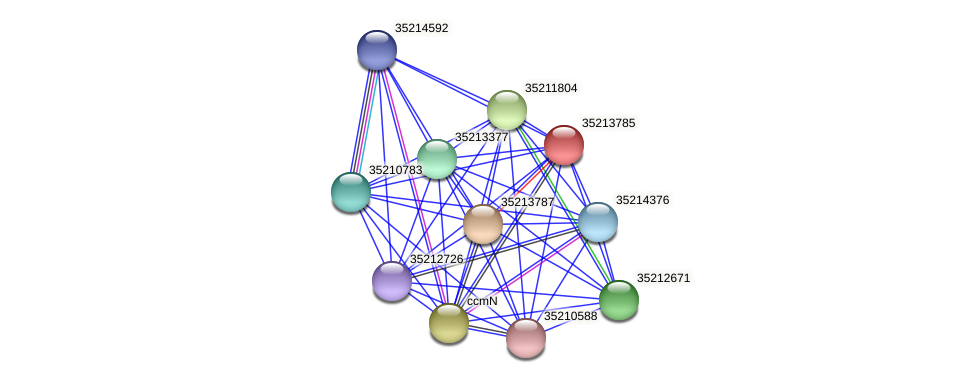 gll3214 protein (Gloeobacter violaceus) - STRING interaction network