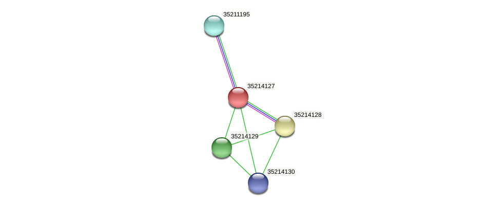 gll3555 protein (Gloeobacter violaceus) - STRING interaction network