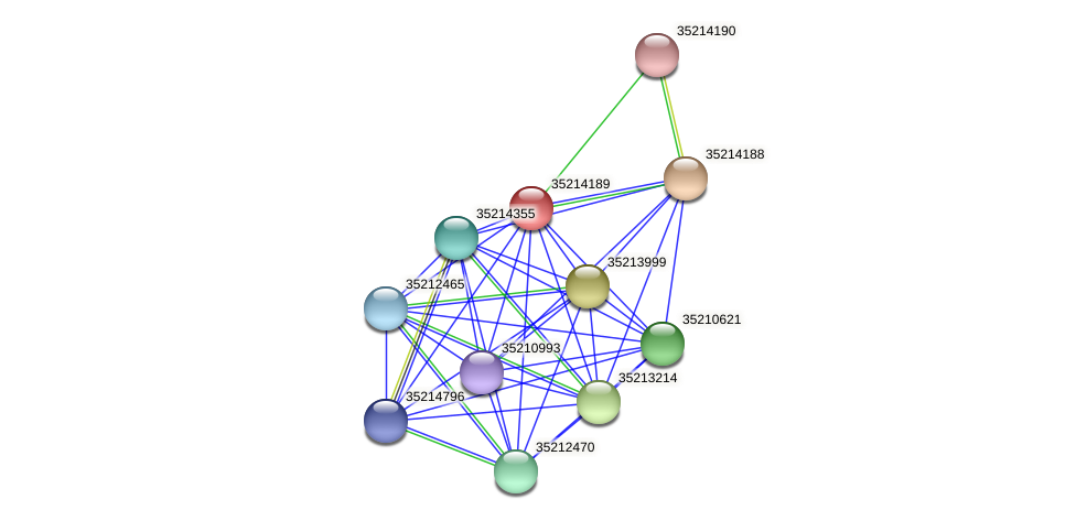 gll3617 protein (Gloeobacter violaceus) - STRING interaction network