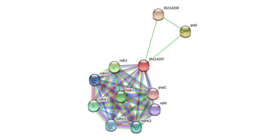 gll3635 protein (Gloeobacter violaceus) - STRING interaction network