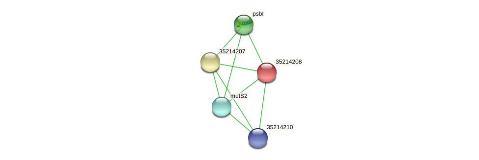 gll3636 protein (Gloeobacter violaceus) - STRING interaction network