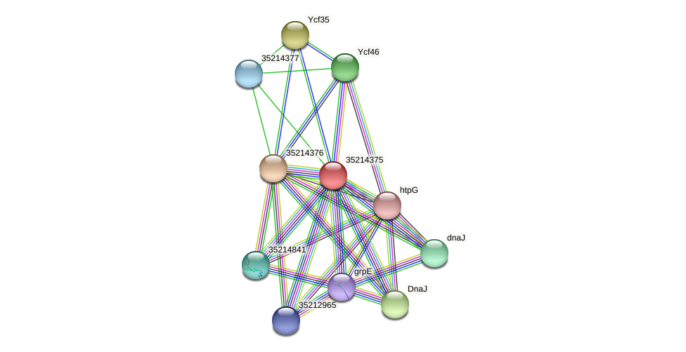 gll3802 protein (Gloeobacter violaceus) - STRING interaction network