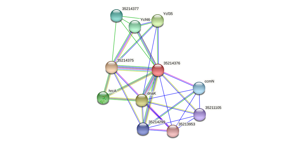 gll3803 protein (Gloeobacter violaceus) - STRING interaction network