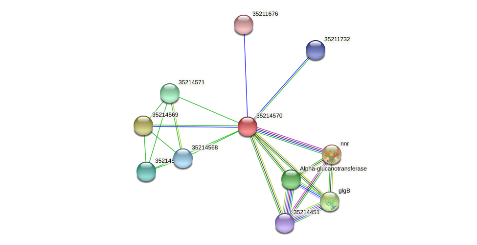 gll3997 protein (Gloeobacter violaceus) - STRING interaction network