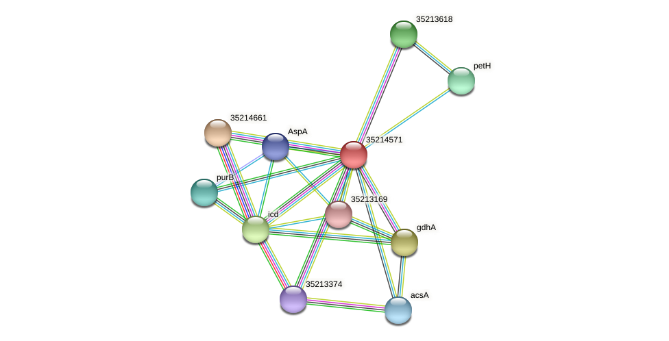 gll3998 protein (Gloeobacter violaceus) - STRING interaction network
