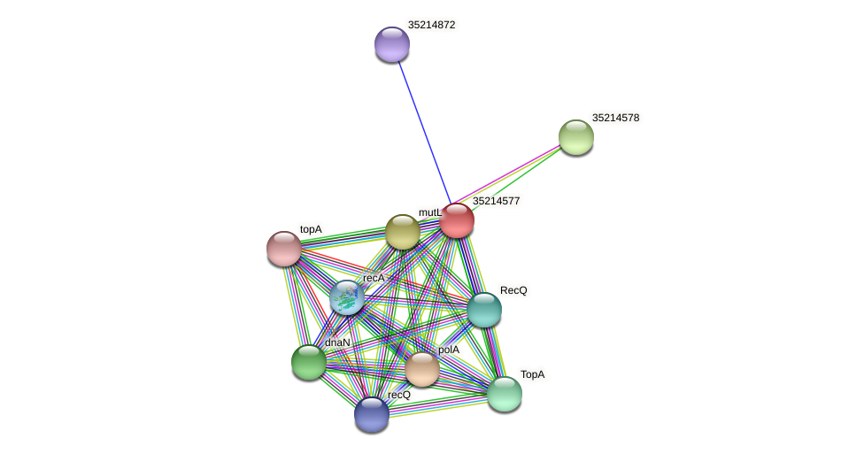 gll4003 protein (Gloeobacter violaceus) - STRING interaction network