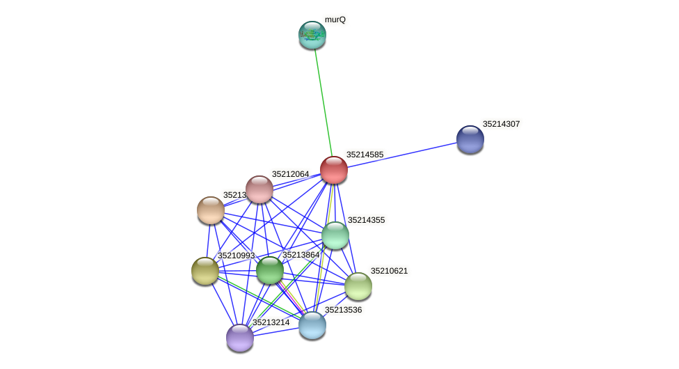 gll4011 protein (Gloeobacter violaceus) - STRING interaction network