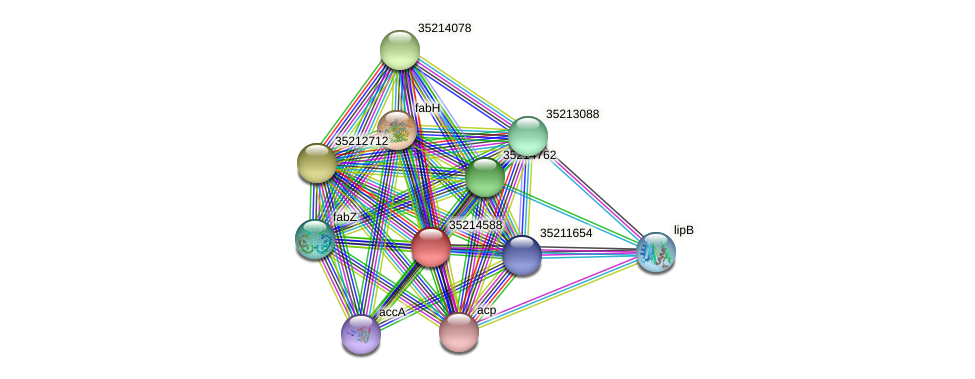 gll4014 protein (Gloeobacter violaceus) - STRING interaction network