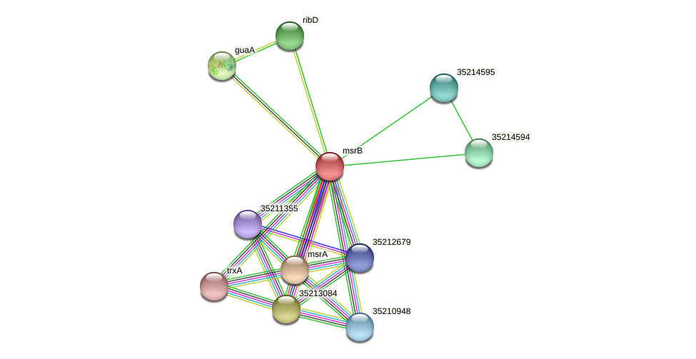 gll4019 protein (Gloeobacter violaceus) - STRING interaction network