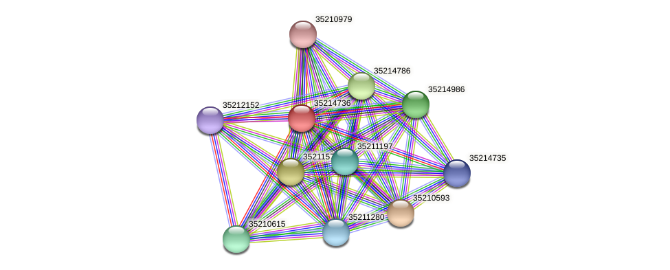 gll4162 protein (Gloeobacter violaceus) - STRING interaction network