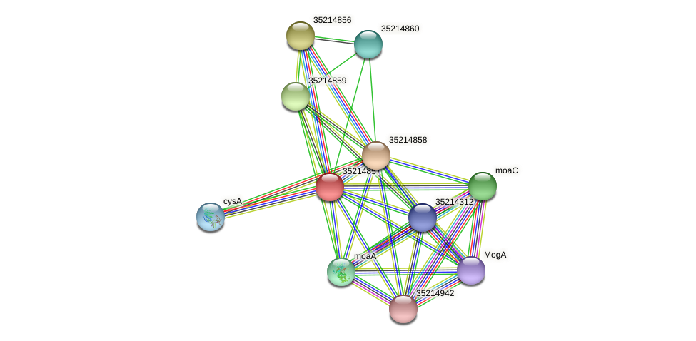 gll4282 protein (Gloeobacter violaceus) - STRING interaction network