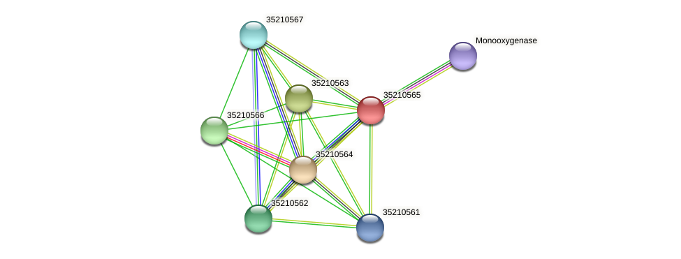 glr0005 protein (Gloeobacter violaceus) - STRING interaction network