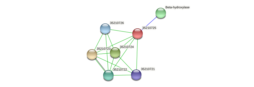glr0165 protein (Gloeobacter violaceus) - STRING interaction network