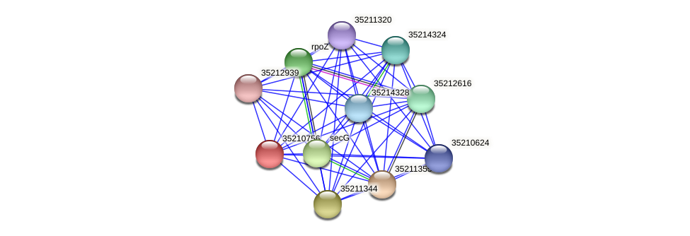 glr0196 protein (Gloeobacter violaceus) - STRING interaction network