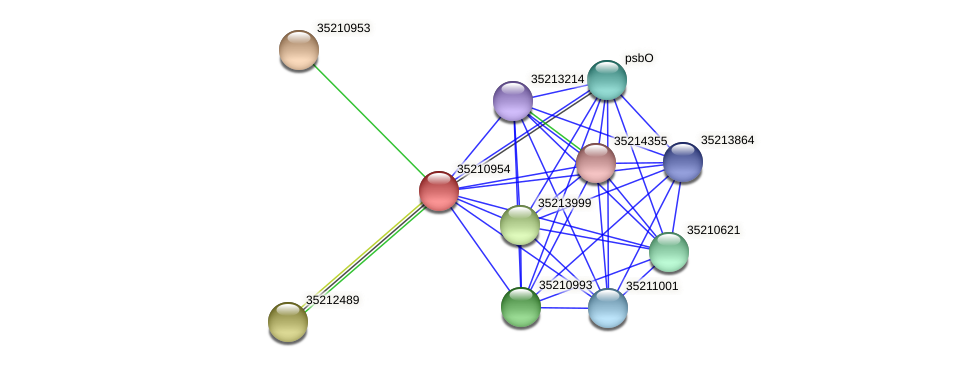 glr0393 protein (Gloeobacter violaceus) - STRING interaction network