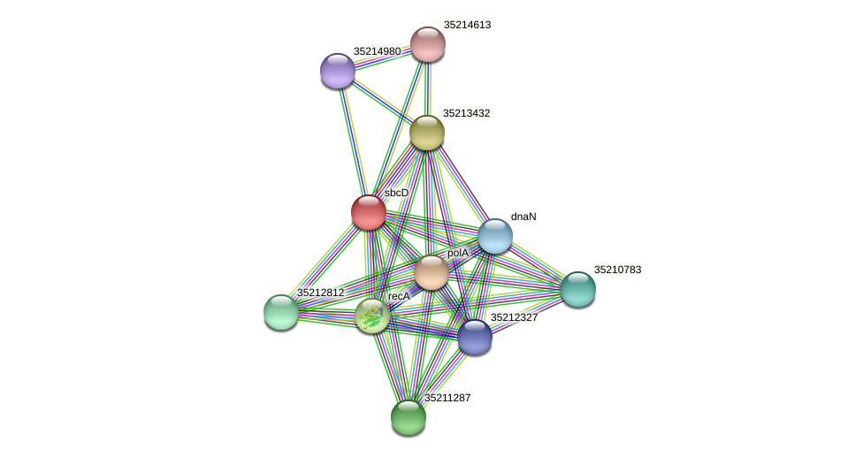 sbcD protein (Gloeobacter violaceus) - STRING interaction network