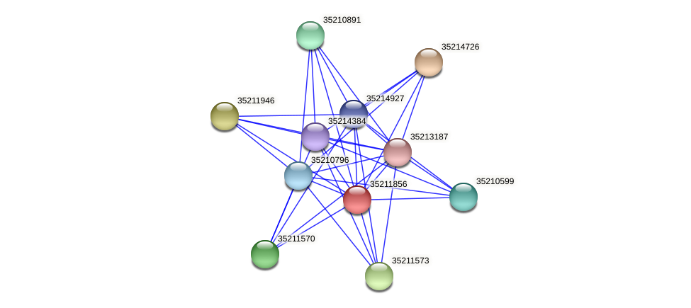glr1292 protein (Gloeobacter violaceus) - STRING interaction network