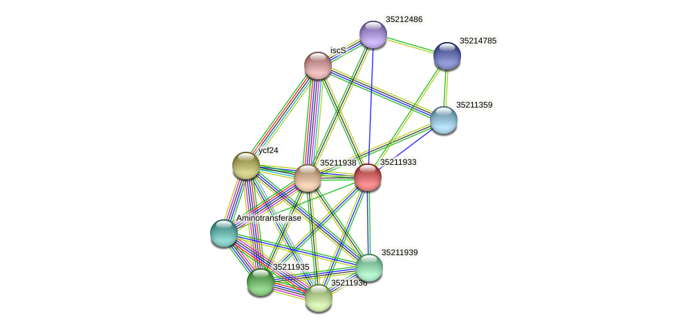 glr1369 protein (Gloeobacter violaceus) - STRING interaction network