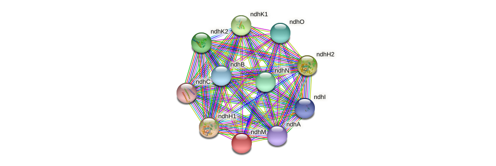 ndhM protein (Gloeobacter violaceus) - STRING interaction network