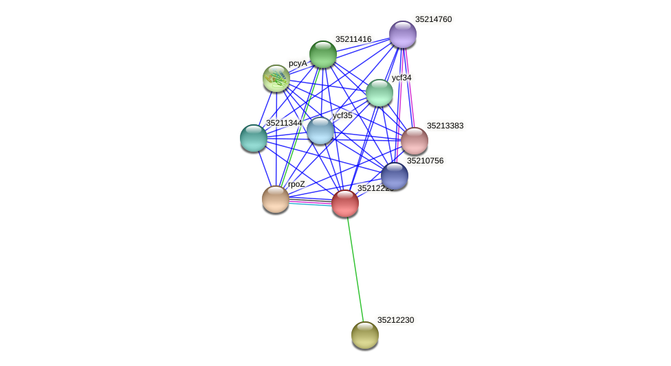 glr1664 protein (Gloeobacter violaceus) - STRING interaction network