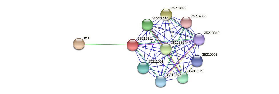 glr1745 protein (Gloeobacter violaceus) - STRING interaction network