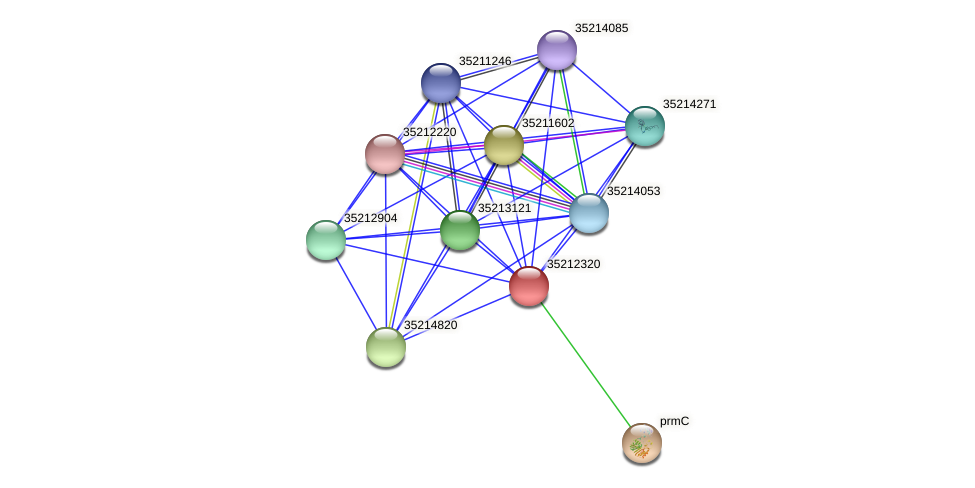 glr1754 protein (Gloeobacter violaceus) - STRING interaction network