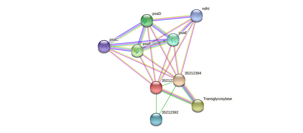glr1827 protein (Gloeobacter violaceus) - STRING interaction network