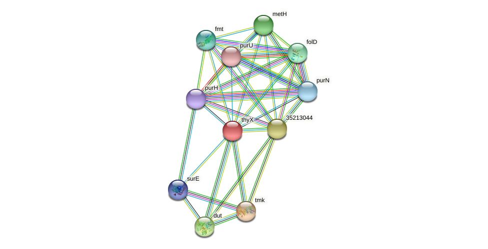 thyX protein (Gloeobacter violaceus) - STRING interaction network
