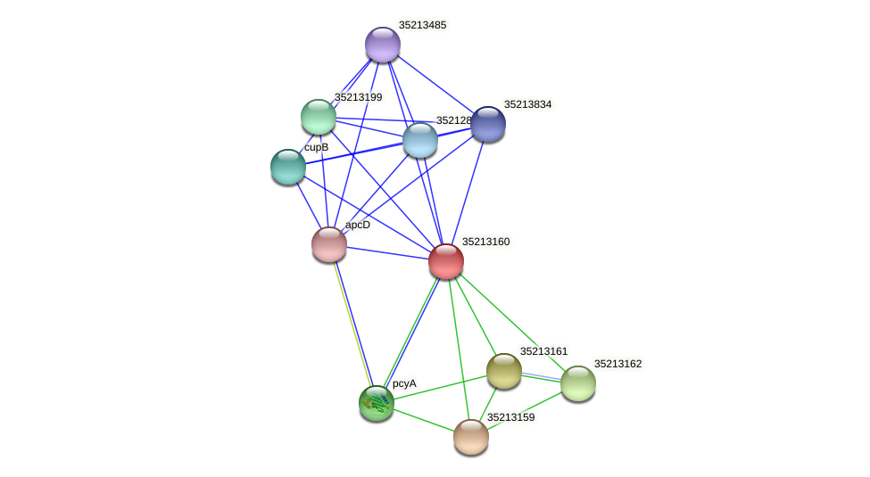 glr2591 protein (Gloeobacter violaceus) - STRING interaction network