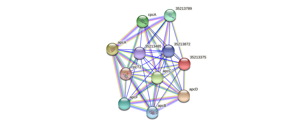 glr2806 protein (Gloeobacter violaceus) - STRING interaction network