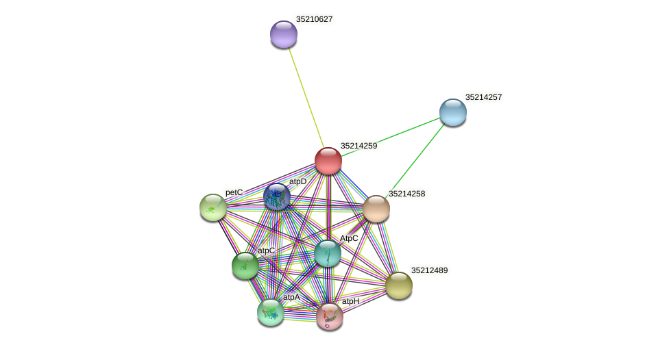 glr3687 protein (Gloeobacter violaceus) - STRING interaction network