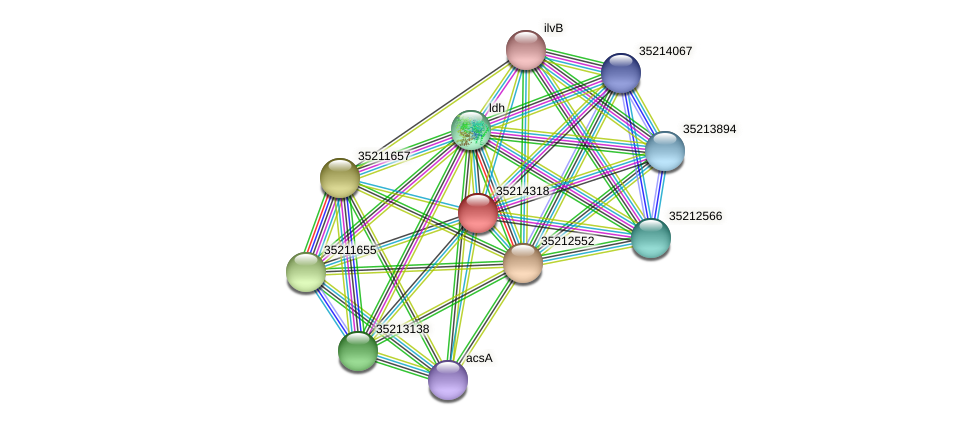 glr3745 protein (Gloeobacter violaceus) - STRING interaction network