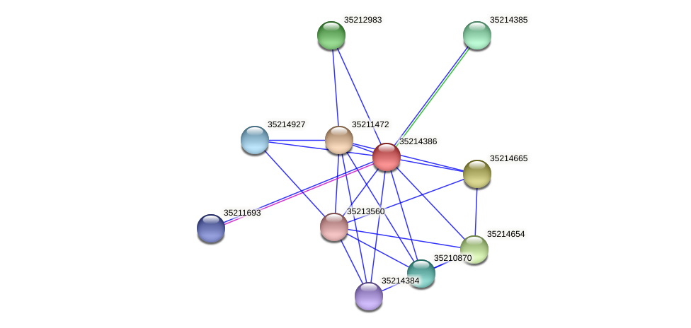 glr3813 protein (Gloeobacter violaceus) - STRING interaction network