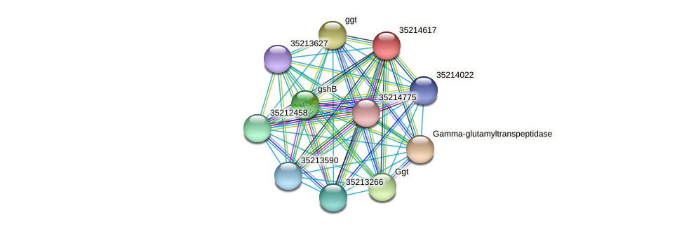 glr4043 protein (Gloeobacter violaceus) - STRING interaction network