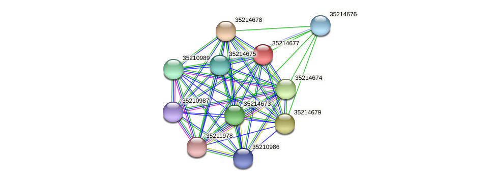 glr4103 protein (Gloeobacter violaceus) - STRING interaction network