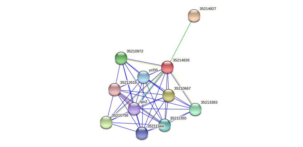 glr4252 protein (Gloeobacter violaceus) - STRING interaction network