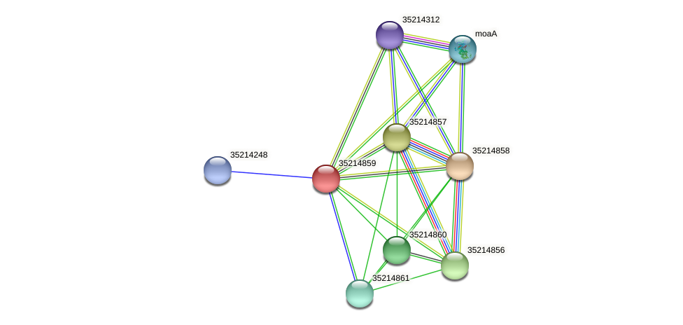 gsl4284 protein (Gloeobacter violaceus) - STRING interaction network