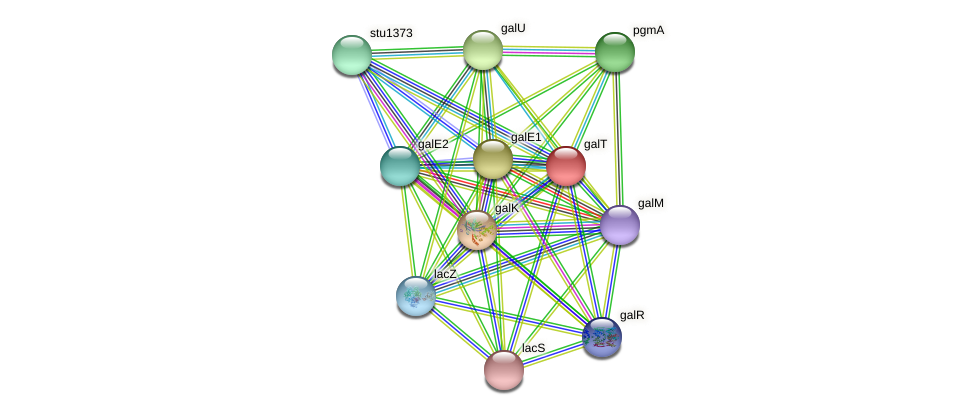 galT protein (Streptococcus thermophilus) - STRING interaction network