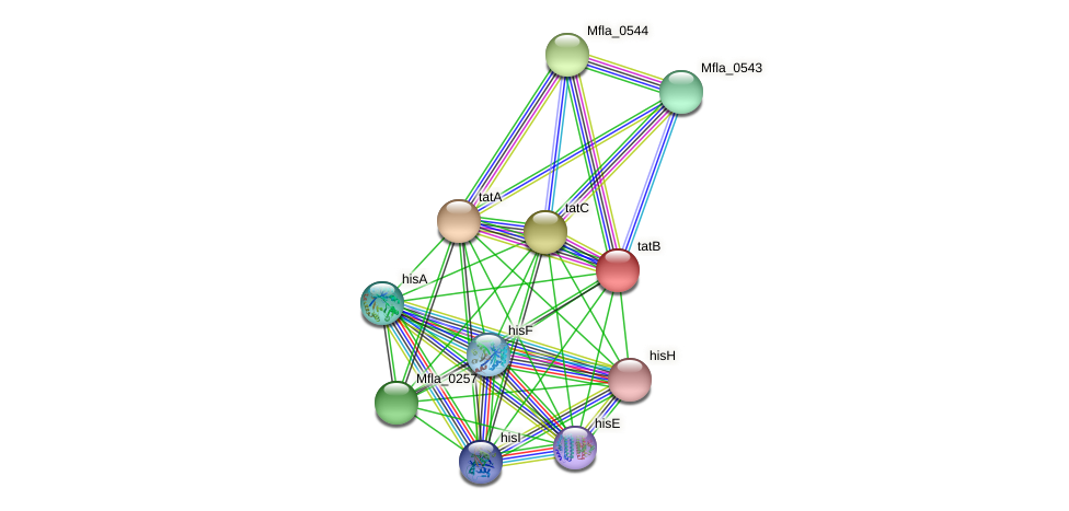 Mfla_0259 protein (Methylobacillus flagellatus) - STRING interaction network
