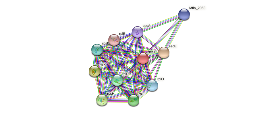 secY protein (Methylobacillus flagellatus) - STRING interaction network