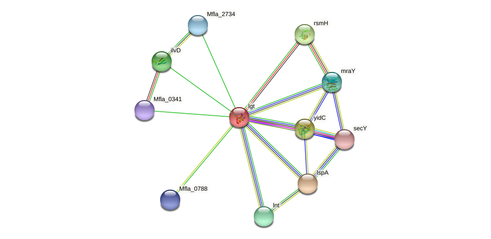 lgt protein (Methylobacillus flagellatus) - STRING interaction network
