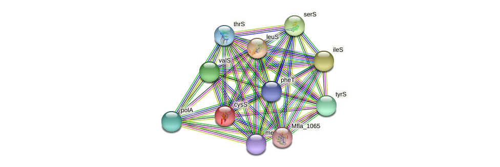 cysS protein (Methylobacillus flagellatus) - STRING interaction network