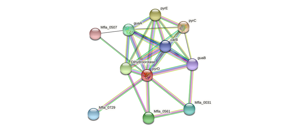 pyrD protein (Methylobacillus flagellatus) - STRING interaction network