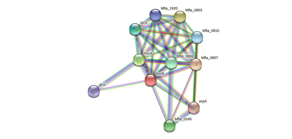 hscB protein (Methylobacillus flagellatus) - STRING interaction network