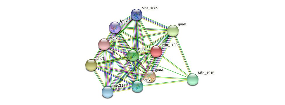 Mfla_1138 protein (Methylobacillus flagellatus) - STRING interaction network