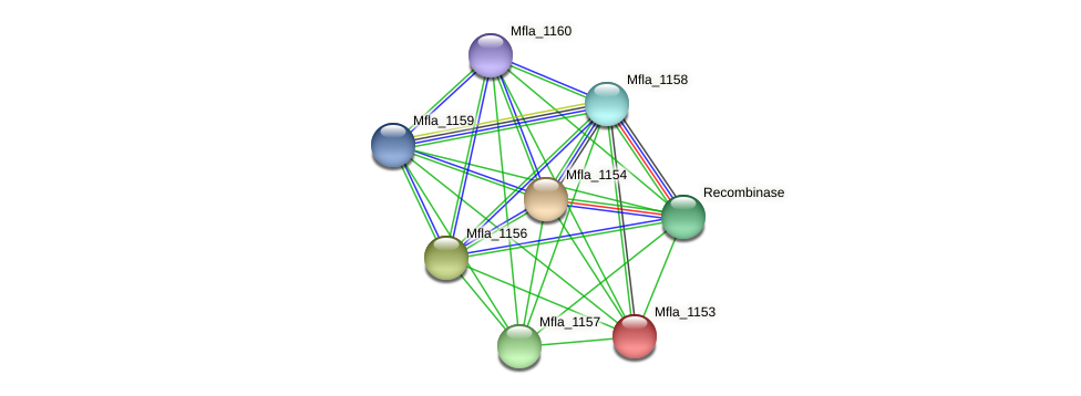 Mfla_1153 protein (Methylobacillus flagellatus) - STRING interaction network