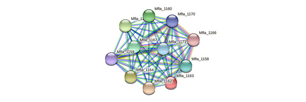 Mfla_1163 protein (Methylobacillus flagellatus) - STRING interaction network