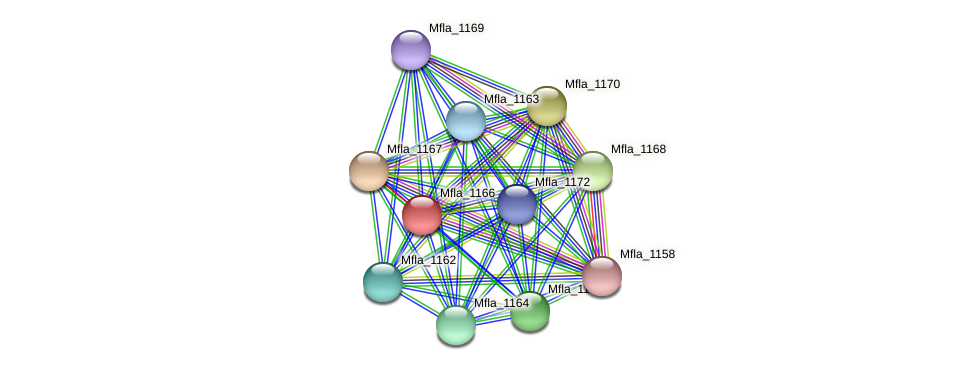Mfla_1166 protein (Methylobacillus flagellatus) - STRING interaction network